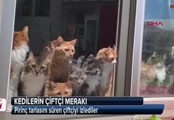Kediler onu görünce kilitlendiler