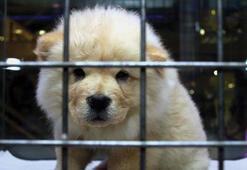Köpek ürettiler, pet shop açtılar