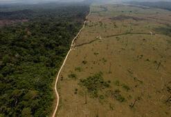 Amazondaki orman kaybı yüzde 20 arttı