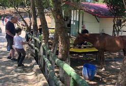 Atlara havuç yedirdi