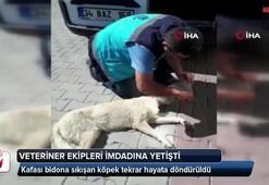 Kafası bidona sıkışan köpek tekrar hayata döndürüldü