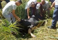 Kuyuya düşen inek güçlükle kurtarıldı