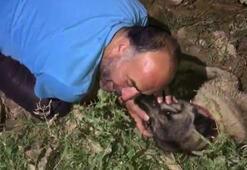 Köpeğinin başından bir an olsun ayrılmadı, gözyaşlarına boğuldu