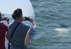 Son dakika: İzmirde denizde fark edildi Şok görüntü..,