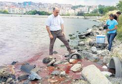 Göldeki deniz  balıkları ölüyor