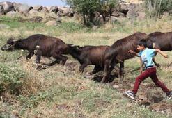 Çobanlık yapan iki kardeşe merada güzel sürpriz