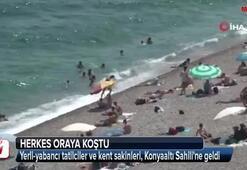 Sıcak havayı gören denize koştu