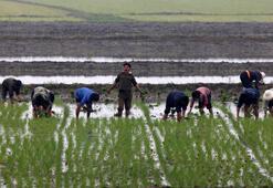 Güney Koreden Kuzeye 50 bin ton pirinç yardımı