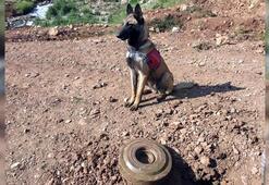 PKKya ağır darbe Mayın imha edildi