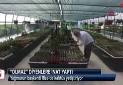 Yağmurun başkenti Rize'de kaktüs yetiştiriyor