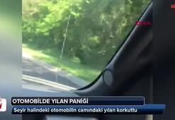 Seyir halindeki otomobilin camındaki yılan korkuttu
