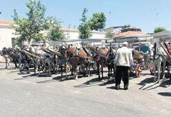 Atların 30 derecede ölüm kalım savaşı
