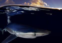 Avustralyada köpek balığı ünlü yüzücüye saldırdı