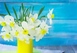 Evde ve ofiste taze çiçek bulundurmanın 4 faydası
