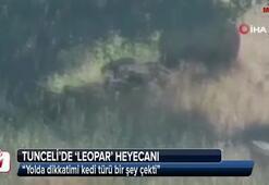 Tuncelide leopar heyecanı