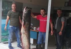 Baraj gölünde 81 kilogramlık yayın balığı yakalandı
