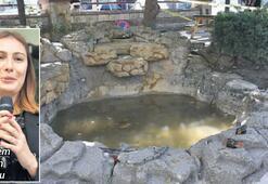 'Süs havuzlarına sıkı kontrol şart'