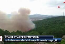 İstanbulda orman yangını