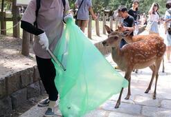 Japonyada kutsal geyikler kilolarca plastik poşet yedikleri için öldü