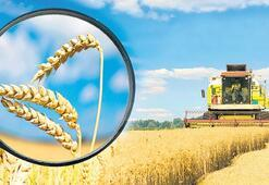 Buğdayda 'emniyet stoku' oluşturulmalı