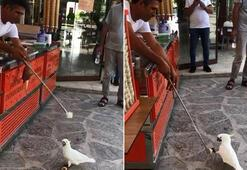Papağana yapılan dondurma şakası izleyenleri gülümsetti