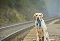 Bu yazılım kayıp köpekleri burun izinden bulabiliyor