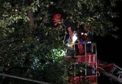 Armut toplamak için çıktığı ağaçta elektrik akımına kapıldı