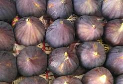 Siyah incir ihracatı 29 Temmuzda başlıyor