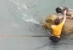 Kayada mahsur kalan köpeği vatandaşlar böyle kurtardı