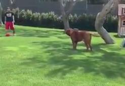 Messi ve çocukları, köpekleri Hulk ile oynuyor