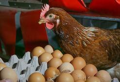 Gezen tavuk üçkâğıdı 10 kuruşa alıp...