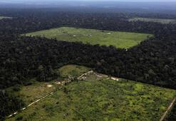 Amazonlar yok oluyor