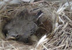 Kuşların yuva yaptığı beton mikseri çalıştırılmıyor