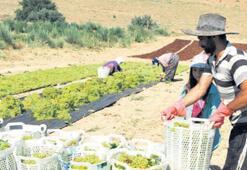 Tarım işçilerinin yevmiyesi