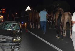Malatyada dehşet 50 yarış atı yola çıktı ve...