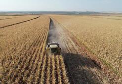 Çin-ABD çekişmesi Türk çiftçisine yarayacak