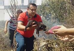 Alevlerin arasından yavru köpekleri böyle kurtardılar