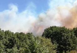Son dakika... İstanbulda orman yangını