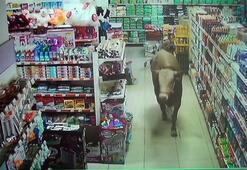 Kurbanlık dana girdiği marketi yerle bir etti