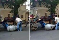 Hayvanlara yazık değil mi Yorgunluğa dayanamayan at bayıldı