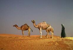 Moritanyada çöl turizmi