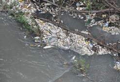 Irmak suyu siyaha döndü, balık ölümleri başladı
