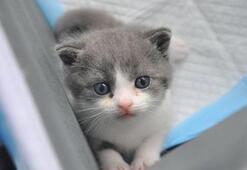 Çinde bir ilk Bu kedi çok başka