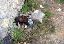Sokak köpeğine işkence iddiası Bu halde bulundu