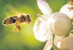 Brezilya'da  500 milyon  arı öldü