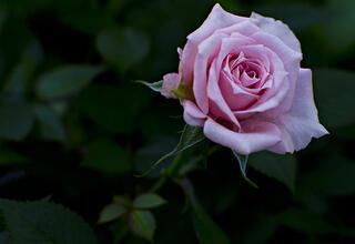 Ruhunuzu ve zihninizi sakinleştirecek 5 çiçek