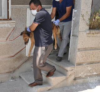 Evden ölmek üzere 24 köpek, 3 kedi ve 3 köpek leşi çıktı