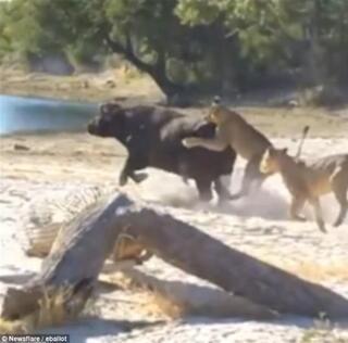 Vahşi doğa