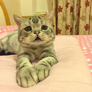 En mutsuz kedi Lulu