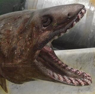 Rus denizcinin tuhaf deniz canlıları
